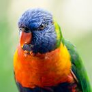 Rainbow Lorikeet by Yorrik