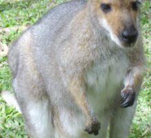 Cute Wallaby Sticker
