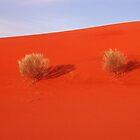 Orange Sandunewith three bushes by Speedy