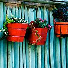 Potted Red by Jabelico