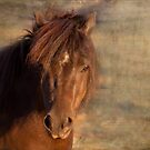 Shetland Pony at sunset by Michelle Wrighton