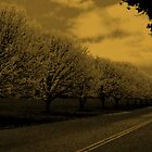 side road by melissa cottrell