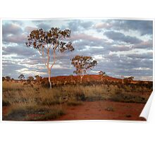 Sunset Ghost Gums,Batton Hill, North Simpson Desert Poster