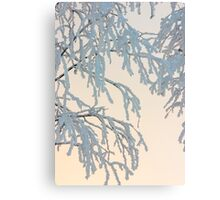 Birch branches in snow Canvas Print