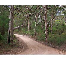 Boranup Forest Drive Photographic Print
