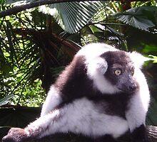 Ruffed Lemur by Futurama