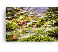 Inverness Morning Webs, Scotland. Canvas Print