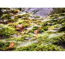 Inverness Morning Webs, Scotland. Photographic Print