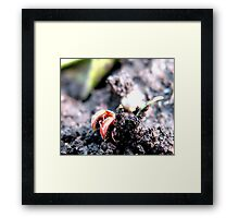 BUGS MAKING LOVE Framed Print