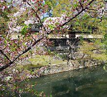 Kurashiki Sakura 2008 by Harlequitmix