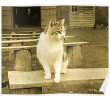 Oscar The Plantation Cat Poster