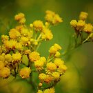Clustered Everlasting. by Bette Devine