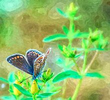 Artwork - Common Blue by ncp-photography
