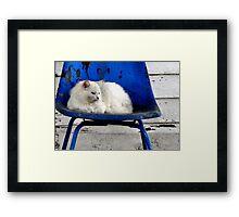 Kentucky Wildcat Framed Print