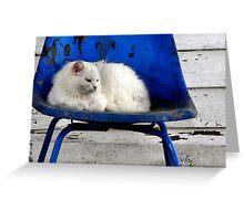 Kentucky Wildcat Greeting Card