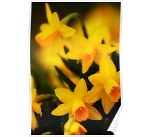 Kneeling Narcissus Poster
