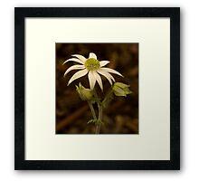Flannel Flower Framed Print