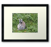 Has Anyone Seen My Tail? (I'm sure it was here a moment ago...) Framed Print