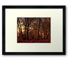 Woods Framed Print