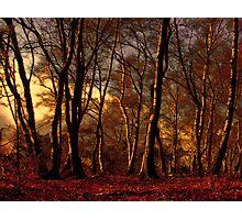 Woods Photographic Print