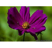 Pink Summer Cosmo Photographic Print