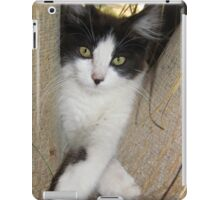 Cute Playful Kitten iPad Case/Skin