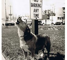No Barking zone by Paul Kassay