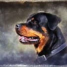 Alle, the sweetest Rotti you'll ever meet !  by Bine