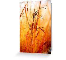 Winter tall grass #2 Greeting Card