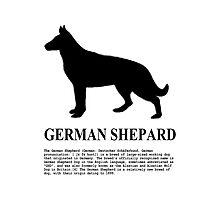 German Shepard Photographic Print