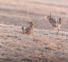 Chicken Fight by Thomas Young