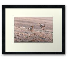 Chicken Fight Framed Print
