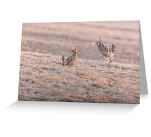 Chicken Fight Greeting Card