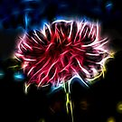 Abstract Flower Barga by Doug Cook