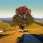 Roadside tree in indian summer colors | landscape photography by Patrick Jobst