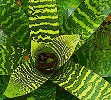 Bromeliad  by Rob Watson