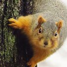Just Squirreling Around by lorilee