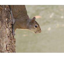 Mr. Squirrel Photographic Print