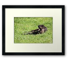 Just Born Reindeer Calf Framed Print