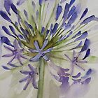 agapanthus bloom 'for the love of flowers' © 2007 patricia vannucci  by PERUGINA