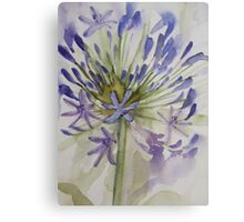 agapanthus bloom 'for the love of flowers' © 2007 patricia vannucci  Metal Print