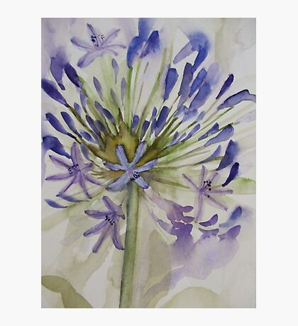 agapanthus bloom 'for the love of flowers' © 2007 patricia vannucci  Photographic Print