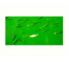 Green Fish Art Print