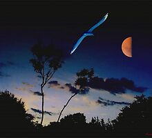 Fly me to the moon by Vasile Stan
