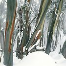 Snow Gums by Ern Mainka