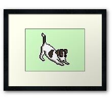 JACK RUSSELL - PUPPY SERIES Framed Print