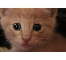 blonde kitten Photographic Print