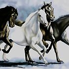 Wild Arabians by Terry Bailey