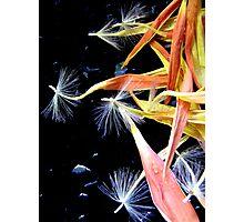 Gerbera Abstract Photographic Print