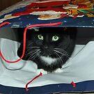 Kitty In a Bag by Vivian Sturdivant
